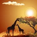 Silhouette of giraffe, with jungle landscape and sun