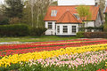 House with tulipfield
