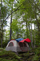 Forest Tent Camping