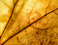 Autumn leaf macro