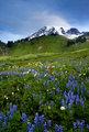 Wildflower Peak