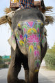 Painted Elephant in India