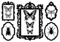 Insects in picture frames, vector