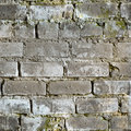 Seamless texture from dirty moldy brick wall