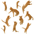 Collection of jumping kittens