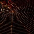 lurking metallic spider