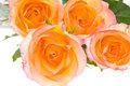 4 roses over white