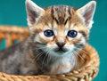 Adorable kitty portrait