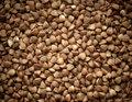 Buckwheat texture background closeup.