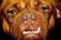 Ugly dog face