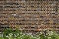 Brick wall and daisies