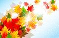 Vibrant Autumn Maple Leaf Background