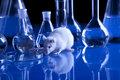 Rats in laboratory