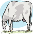Fat Cow Grazing
