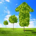 Green grass arrows