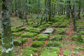 Santiago forest, Alava, Spain