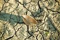 River shell on dry bottom