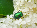 The motley green bug on the white leaves