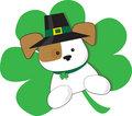 Irish Puppy