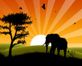 Africa Sunset - Silhouette of Elephant approaching three