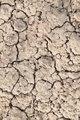 Dry land, dry scaly ground