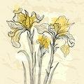 Iris flower vector illustration.