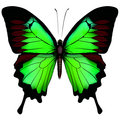 Vector illustration of beautiful green butterfly  isolated on wh
